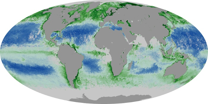 Global Map Chlorophyll Image 110