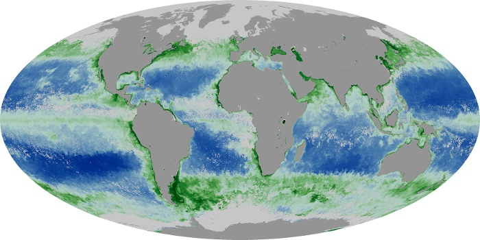 Global Map Chlorophyll Image 113