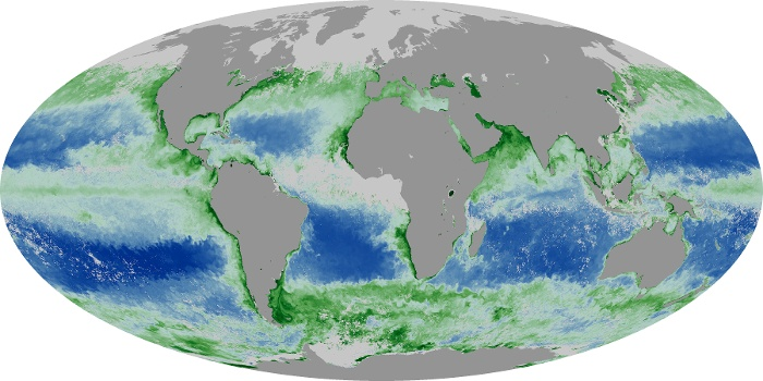 Global Map Chlorophyll Image 115