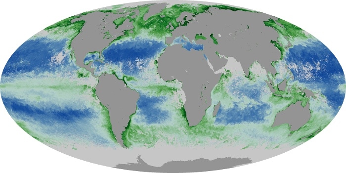 Global Map Chlorophyll Image 122