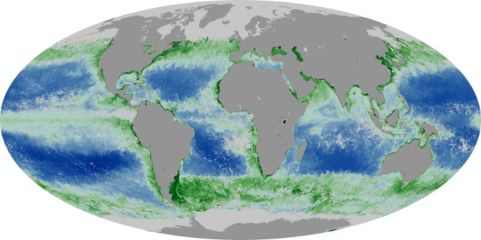 Global Map Chlorophyll Image 77