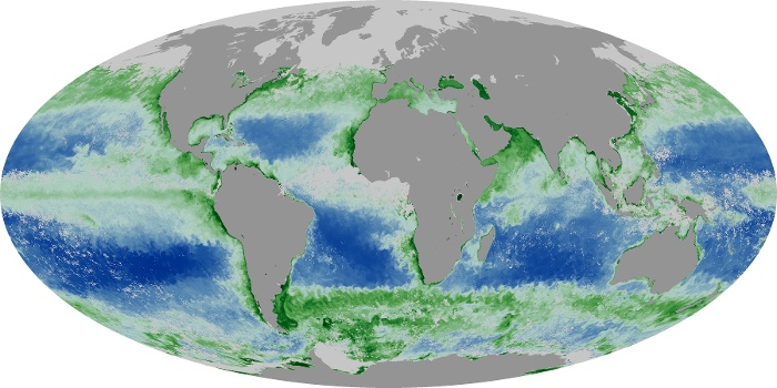 Global Map Chlorophyll Image 127