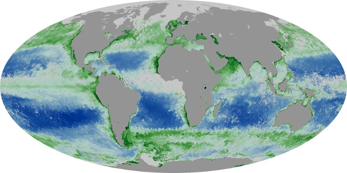Global Map Chlorophyll Image 80
