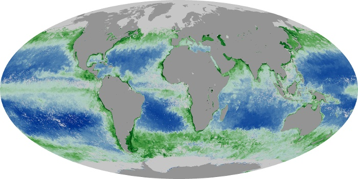 Global Map Chlorophyll Image 137