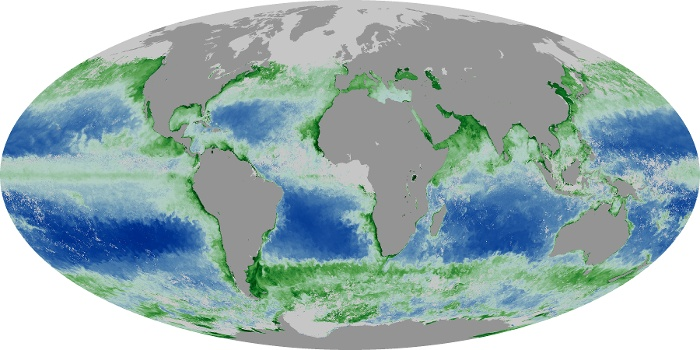 Global Map Chlorophyll Image 139