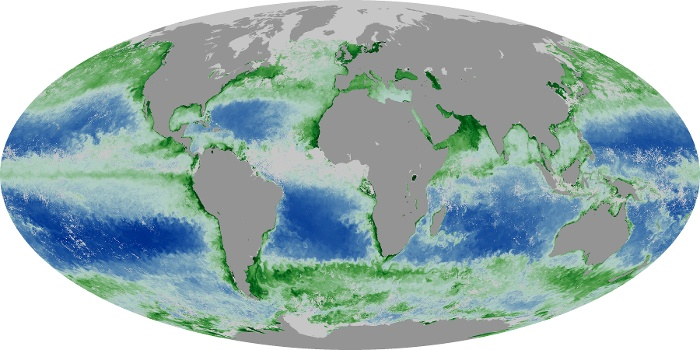Global Map Chlorophyll Image 140