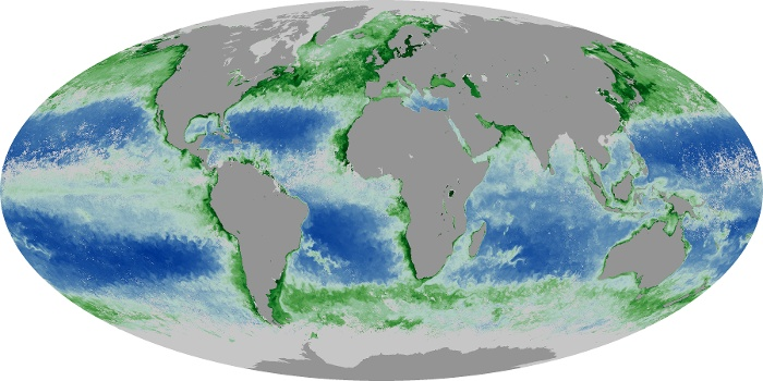 Global Map Chlorophyll Image 142