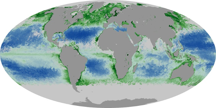 Global Map Chlorophyll Image 144