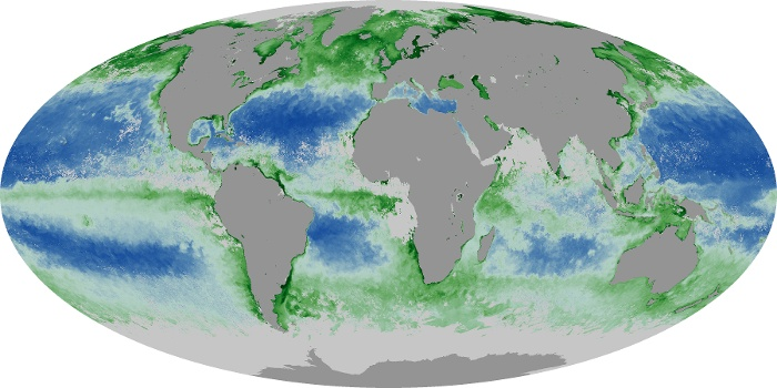 Global Map Chlorophyll Image 146