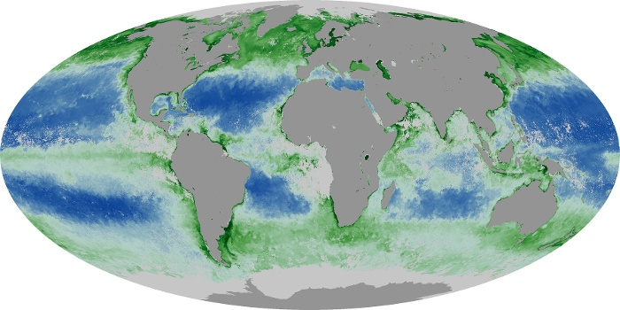 Global Map Chlorophyll Image 147