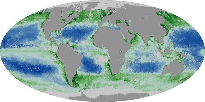 Global Map Chlorophyll Image 148