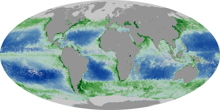 Global Map Chlorophyll Image 149