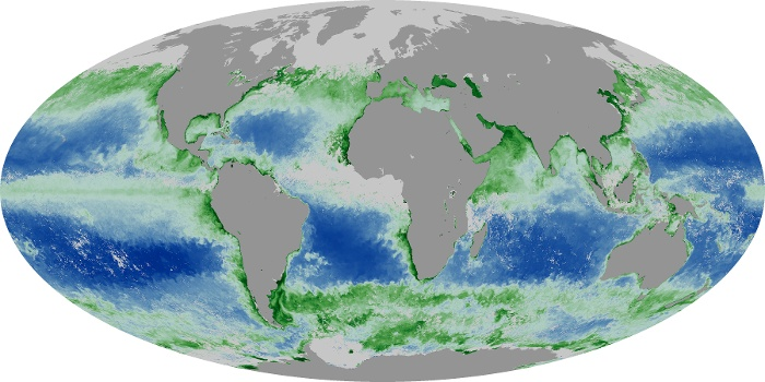 Global Map Chlorophyll Image 151