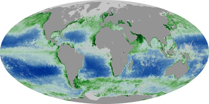 Global Map Chlorophyll Image 104