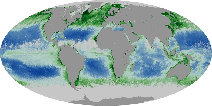 Global Map Chlorophyll Image 155