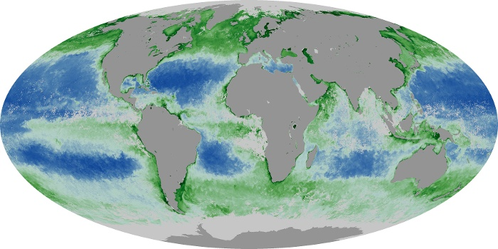 Global Map Chlorophyll Image 159