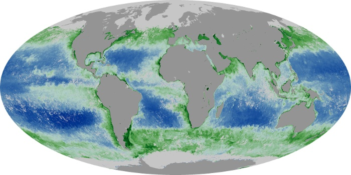 Global Map Chlorophyll Image 161