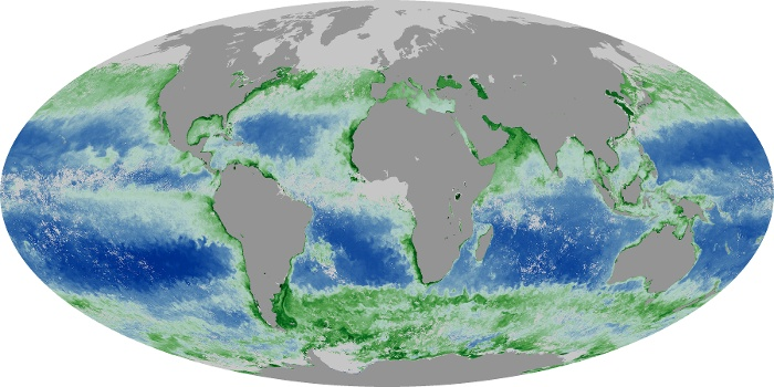 Global Map Chlorophyll Image 163