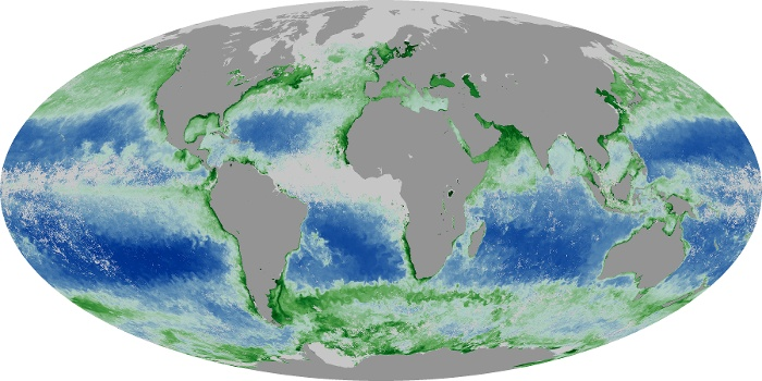 Global Map Chlorophyll Image 164