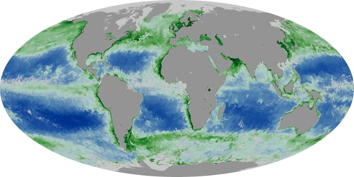 Global Map Chlorophyll Image 165