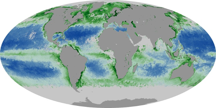 Global Map Chlorophyll Image 121