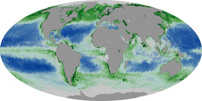 Global Map Chlorophyll Image 123