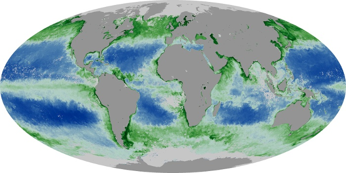 Global Map Chlorophyll Image 124