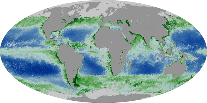 Global Map Chlorophyll Image 125