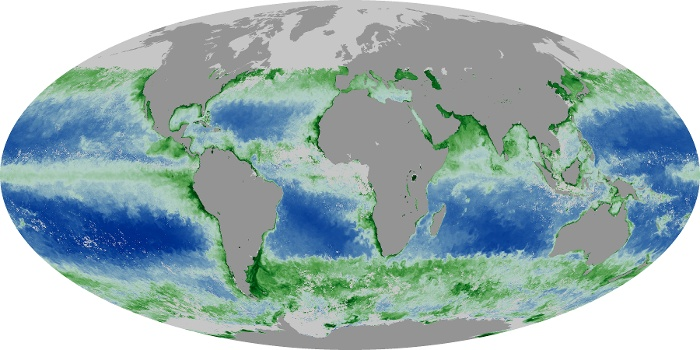 Global Map Chlorophyll Image 174