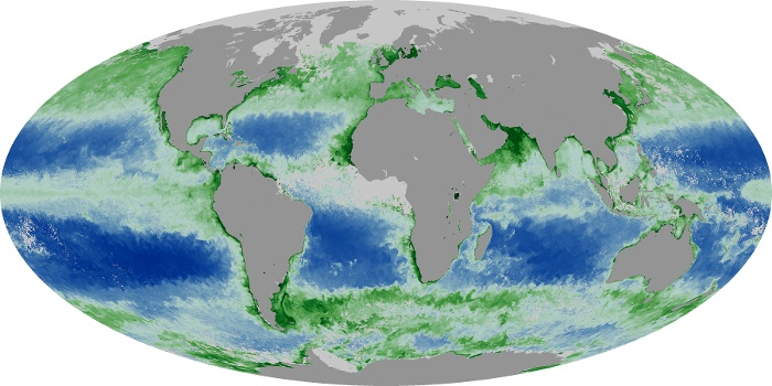 Global Map Chlorophyll Image 128
