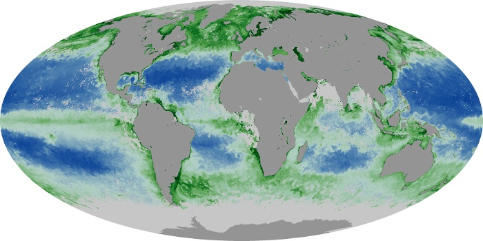 Global Map Chlorophyll Image 134