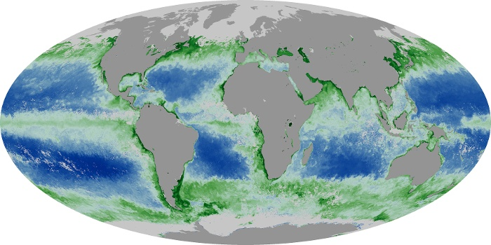 Global Map Chlorophyll Image 185