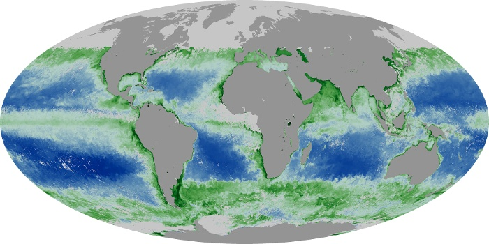 Global Map Chlorophyll Image 138