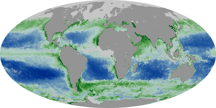 Global Map Chlorophyll Image 187
