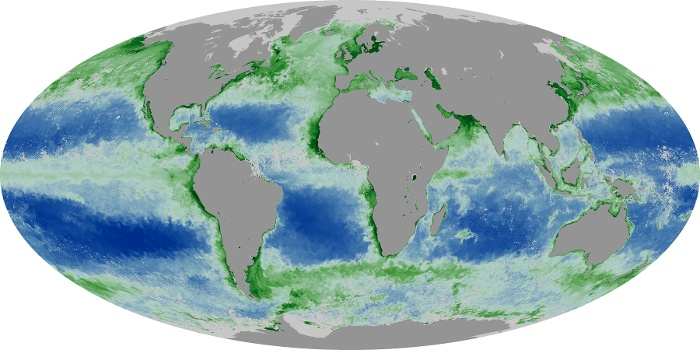 Global Map Chlorophyll Image 141