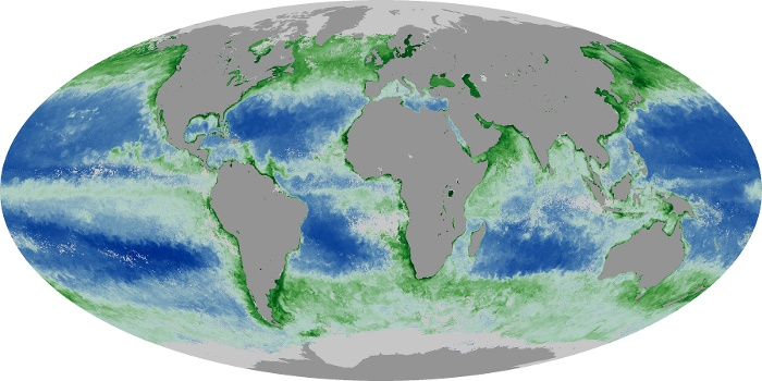 Global Map Chlorophyll Image 196