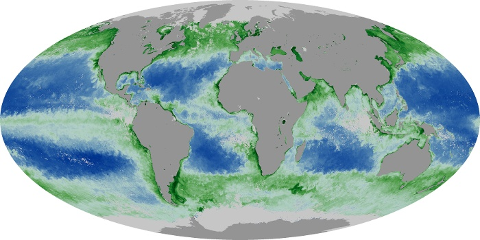 Global Map Chlorophyll Image 208