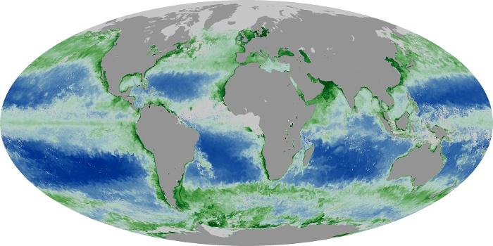Global Map Chlorophyll Image 224