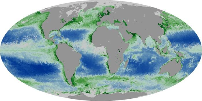 Global Map Chlorophyll Image 225