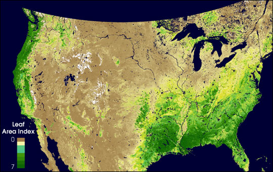 MODIS Measures Total U.S. Leaf Area
