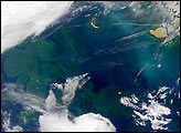 Phytoplankton and Coccolithophores in the Bering Sea