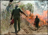 Prescribed Burns During SAFARI