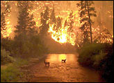 Bitterroot Inferno