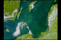 Phytoplankton bloom in the Baltic Sea