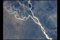 Elephant damage to vegetation in Botswana