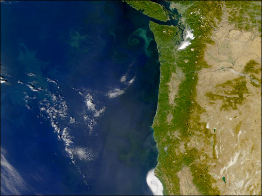 Phytoplankton off the Coast of Washington State