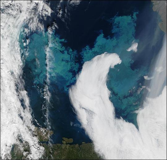 Coccolithophores in the Barents Sea