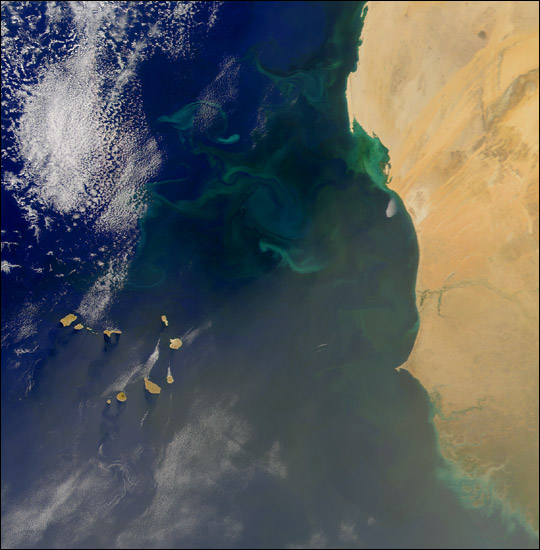 Phytoplankton Bloom off West Africa