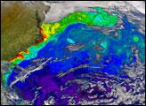 Gulf Stream in Bloom