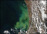 Phytoplankton off South African Coast